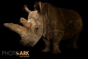 Poslední fotka Nabiré, jejímž autorem je fotograf a bojovník za záchranu ohrožených druhů Joel Sartore. Zdroj: ZOO DK