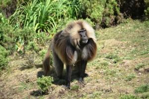 Etiopie nabízí turistovi řadu přírodních lákadel. Foto: Africký informační portál