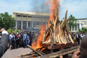 Téměř 5 tun ilegální slonoviny bylo spáleno na dvou hranicích v Brazzaville. Republika Kongo, 2015.