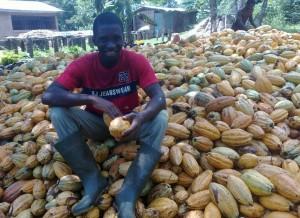 Ghanský farmář obklopený plody kakaovníku. Zdroj: Wikimedia commons